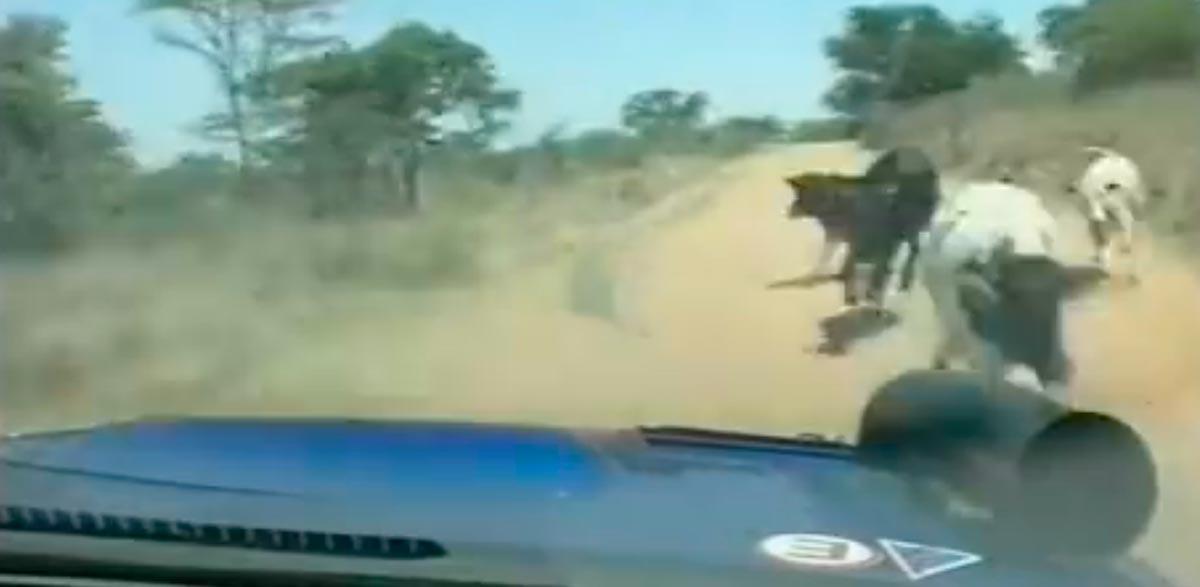 Juha Kankkunen, Rallye Safari 2000