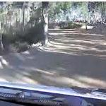 Lo mejor de… el Rallye de Portugal